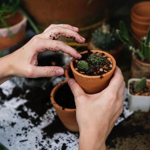 Ferramenta e Giardinaggio